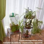 Arrosage automatique plante interieur