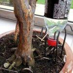 Arrosage automatique plante interieur